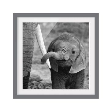 Product picture Framed print - Baby Elephant - Square...