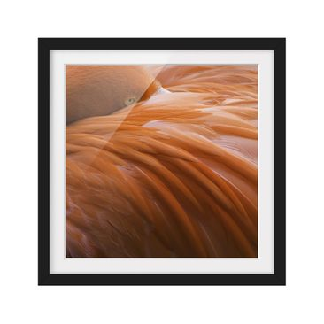 Product picture Framed print - Flamingo Feathers -...