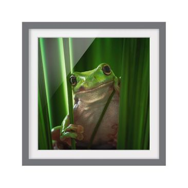 Product picture Framed print - Happy Frog - Square...