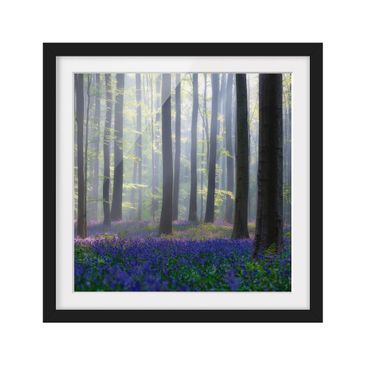 Product picture Framed print - Spring Day In The Forest...