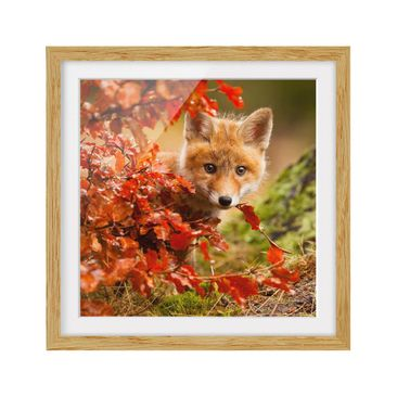 Product picture Framed print - Fox In The Fall - Square...