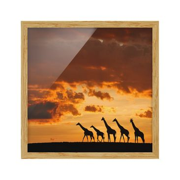 Product picture Framed print - Five Giraffes - Square...