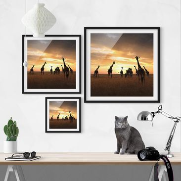 Product picture Framed print - Giraffe Family - Square...