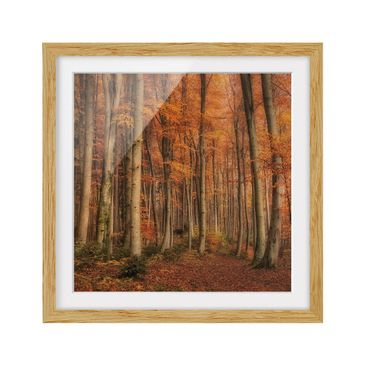 Product picture Framed print - Autumn Walk - Square...