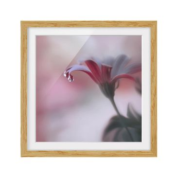 Product picture Framed print - Invisible Touch - Square...