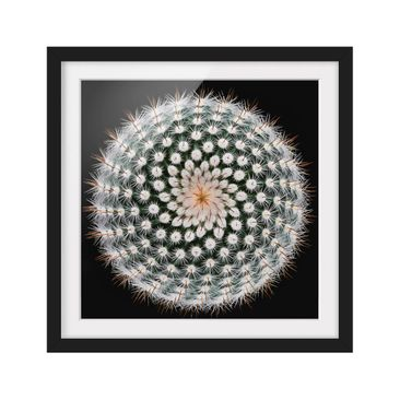 Product picture Framed print - Cactus Flower - Square...