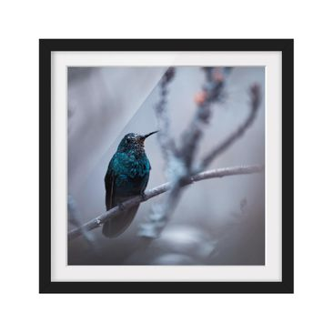 Product picture Framed print - Hummingbird In Winter -...