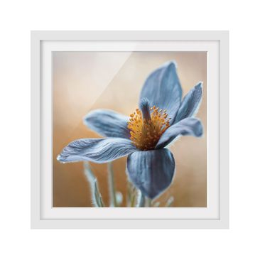 Product picture Framed print - Arctic Violet In Blue -...