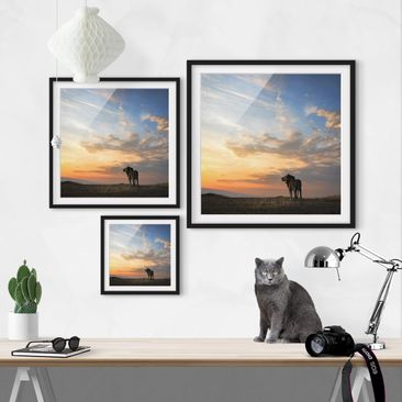 Product picture Framed print - Lion In Sunset - Square...