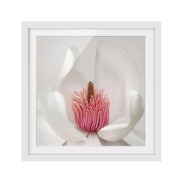 Product picture Framed print - Magnolia In Pink - Square...