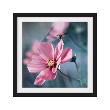 Product picture Framed print - Ladybug At The Start -...