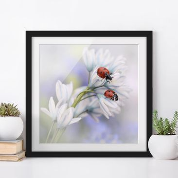 Product picture Framed print - Ladybugs Couple - Square...