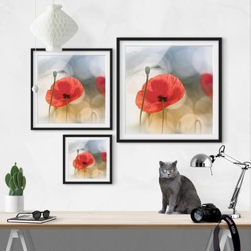 Product picture Framed print - Poppies In The Morning -...
