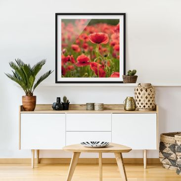 Product picture Framed print - Poppy Field In Sunlight -...