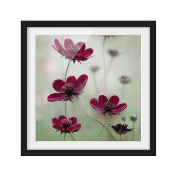 Product picture Framed print - Pink Kosmeen - Square...