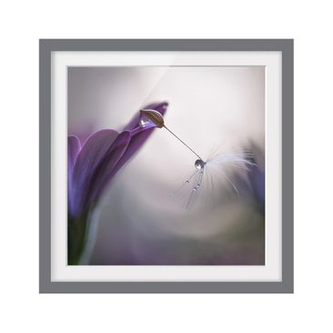 Product picture Framed print - Purple Rain - Square...