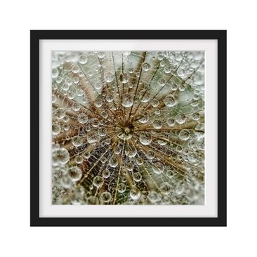 Product picture Framed print - Dandelion In Autumn -...