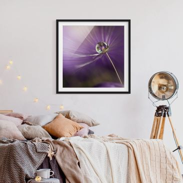 Product picture Framed print - Dandelion In Violet -...