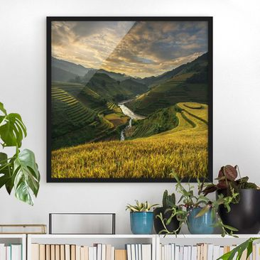 Produktfoto Framed print - Rice Plantations In...