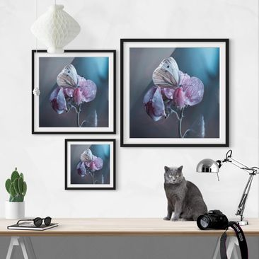 Product picture Framed print - Butterfly In The Rain -...