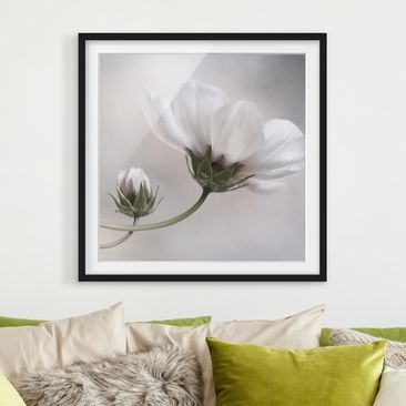 Product picture Framed print - Simply Cosmos - Square...