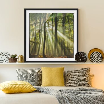 Product picture Framed print - Sunny Day In The Forest -...