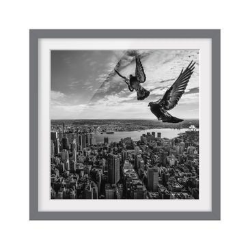 Product picture Framed print - Pigeons On The Empire...