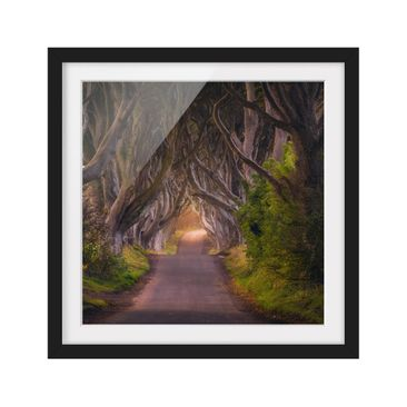 Product picture Framed print - Tunnel From Trees -...