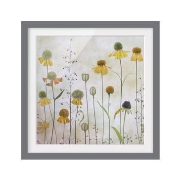 Product picture Framed print - Gentle Helenium Blossoms...