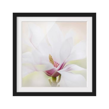 Product picture Framed print - Gentle Magnolia Blossom -...