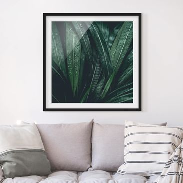 Product picture Framed print - Green Palm Leaves -...