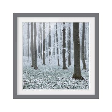 Product picture Framed print - Beeches With Hoarfrost -...