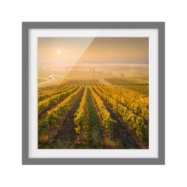 Product picture Framed print - Autumnal Vineyards Near...