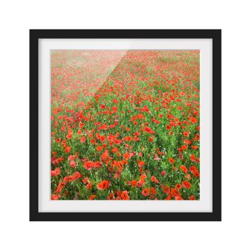 Product picture Framed print - Poppy Field - Square...