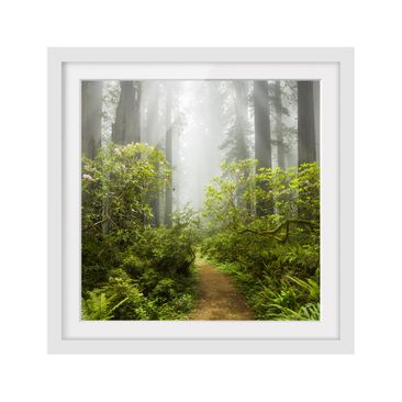 Product picture Framed print - Misty Forest Path -...