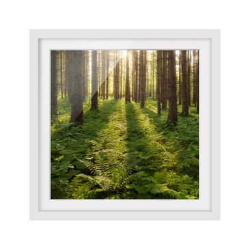 Product picture Framed print - Sunbeams In Green Forest...