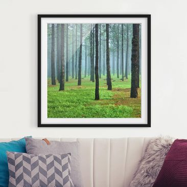 Product picture Framed print - Deep Forest With Pine...