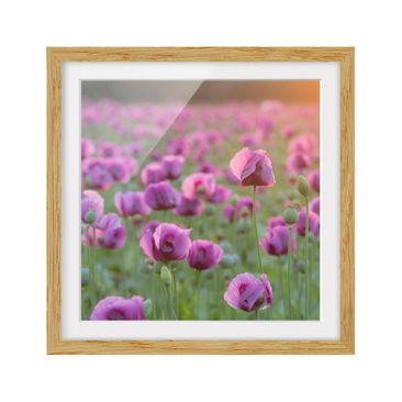 Product picture Framed print - Purple Poppy Flower...