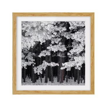 Product picture Framed print - Forest With Hoarfrost In...