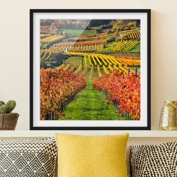 Produktfoto Framed print - Vineyard View - Square...