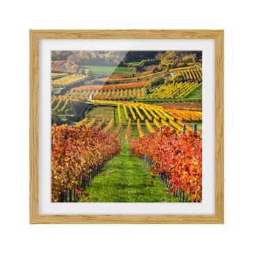Product picture Framed print - Vineyard View - Square...