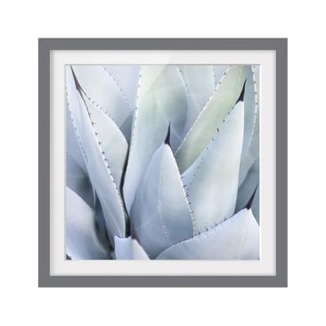 Product picture Framed print - Agave - Square Format 1:1