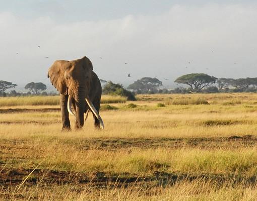 Produktfoto Fensterfolie - Sichtschutz Fenster Elefanten vor dem Kilimanjaro in Kenia - Fensterbilder
