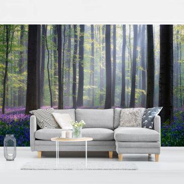 Produktfoto Tapete selbstklebend - Frühlingstag im Wald - Fototapete Querformat