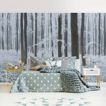 Product picture Photo Wall Mural - Beeches With...