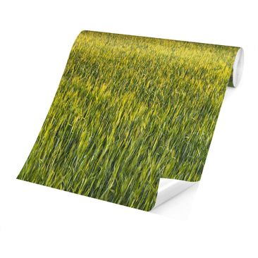 Product picture Photo Wall Mural - Green Field In...