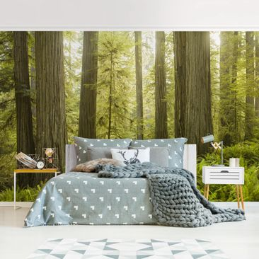 Product picture Photo Wall Mural - Redwood State Park...
