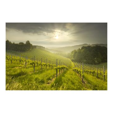 Product picture Photo Wall Mural - Sunrays Vineyard -...