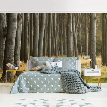 Product picture Photo Wall Mural - Forest Road In...
