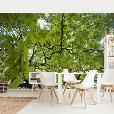 Product picture Photo Wall Mural - Treetop -...